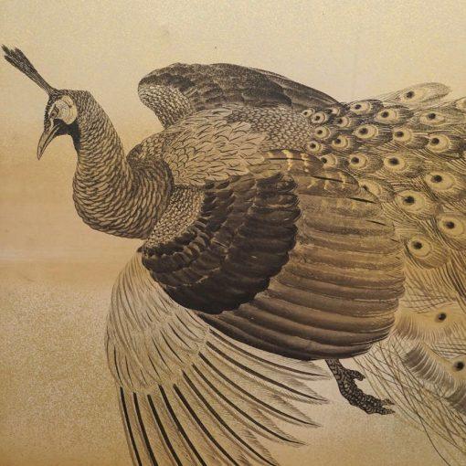 peafowl head