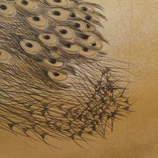 peafowl tail