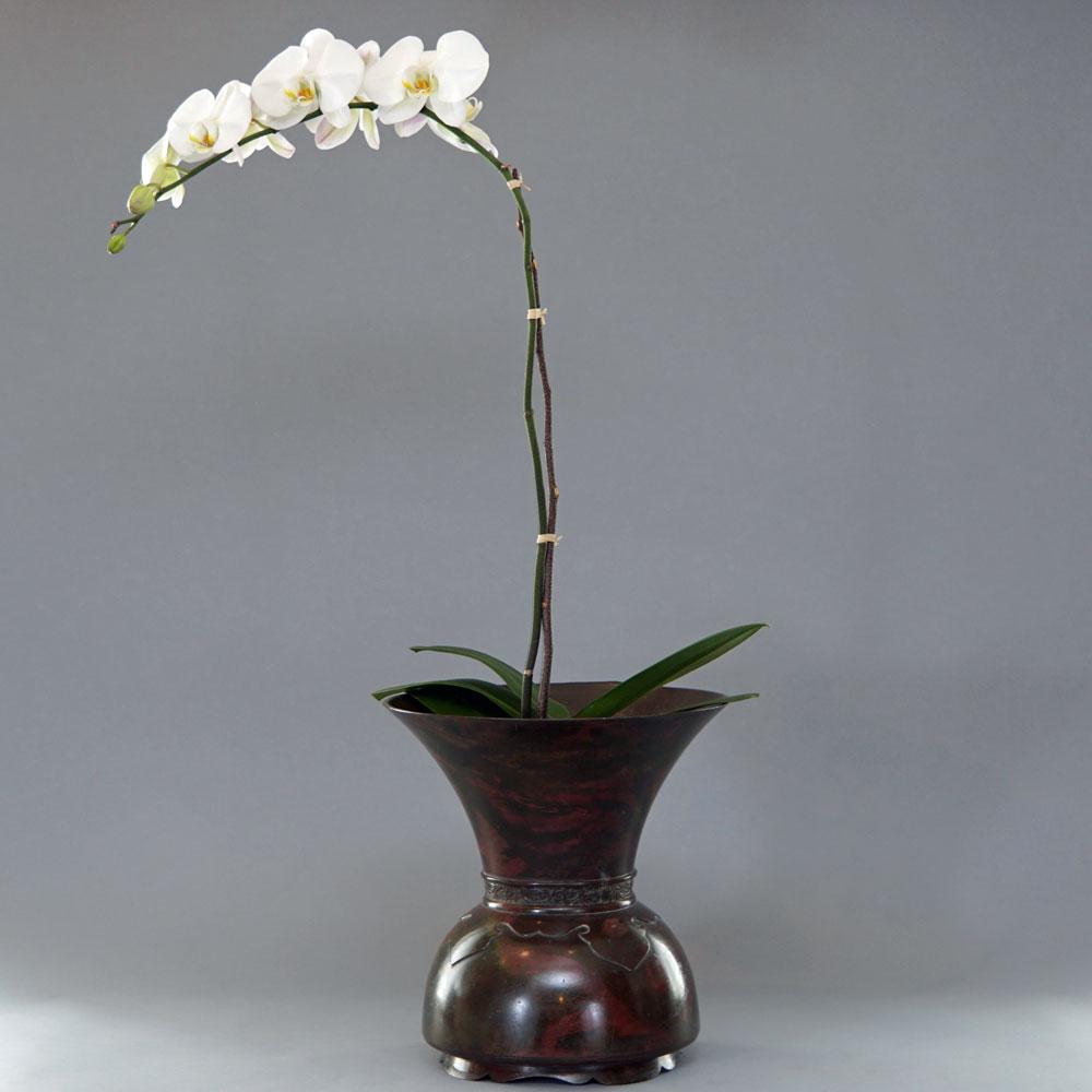 orchid bronze